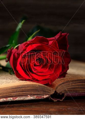 Red Rose On A Vintage Book On Dark Background. Flower On Literature Page Of Opened Hardcover Tome Pr
