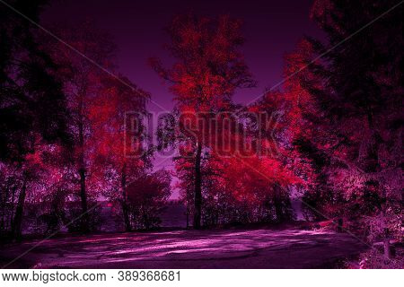 Halloween Mysterious Forest Toned Design In Red And Purple Forest With Silhouette Of Trees And Moonl
