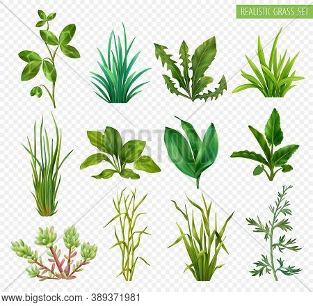 Realistic Grasses Herbs Succulents Green Plants Set With Clover Dandelion Chives Plantain Isolated T