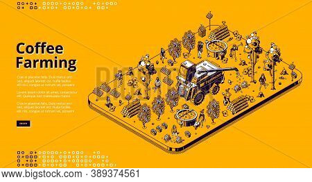 Coffee Farming Banner. Eco Technologies For Picking Coffee Beans On Plantation. Vector Isometric Ill