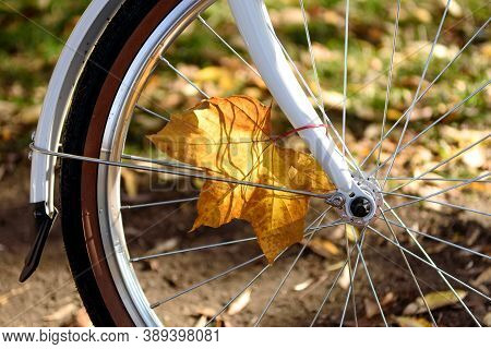 Autumn Colorful Leaves On A Bicycle. Close-up Of A Bicycle Wheel In The Autumn Forest. Ride A Bike L
