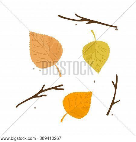 Colorful Aspen Fallen Autumn Seasonal Leaf From Tree Vector Illustration