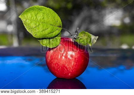 Red Apple With Green Leafs In The Garden