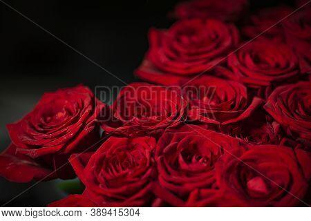 Red Natural Fresh Bouqet Of Roses Background Pattern, Macro Studio Shot