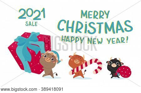 Christmas Sale Design Template.christmas Banner.xmas Cute Bulls With Giant Gift, Holiday Candy And B