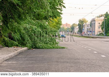 Tree Fallen On The Edge Of The Carriageway Of A City Street, Selective Focus
