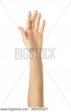 Raised Hand Voting Or Reaching. Woman Hand Gesturing Isolated On White