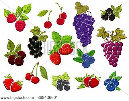 Wild And Garden Berries Isolated Sketches. Bunch Of Grapes, Cherry And Strawberry, Blueberry, Blackc