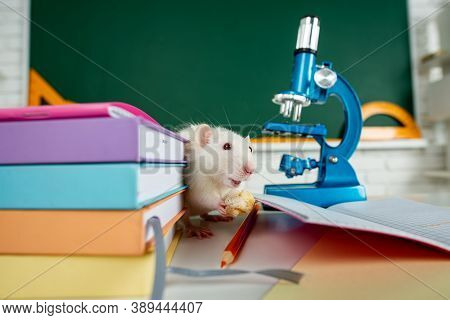 White Rat Sitting On Microscope. Concept - Testing Of Drugs, Vaccines, Laboratory Animals, Humanity,