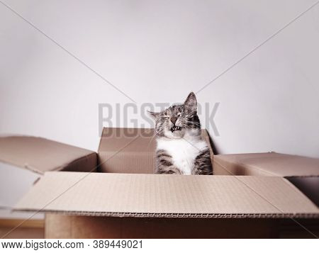 Funny Laughing Cat In A Cardboard Box Or Carton With Copy Space