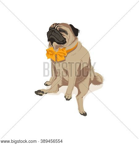 Cute Pug Dog In Bow Tie. Adorable Friendly Purebred Chubby Domestic Pet Animal Wearing Elegant Class
