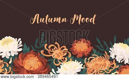 Autumn Backdrop With Blooming Flowers. Fall Horizontal Background With Japanese Chrysanthemum. Banne