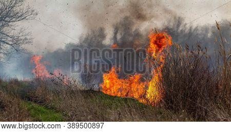 Fire. Grass Is Burning On The Field. Fire Flame Close Up.