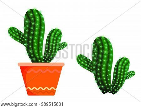 Flower Prickly Cactus In An Orange Indoor Pot. Exotic Plants In The Botanical Garden And At Home. Su