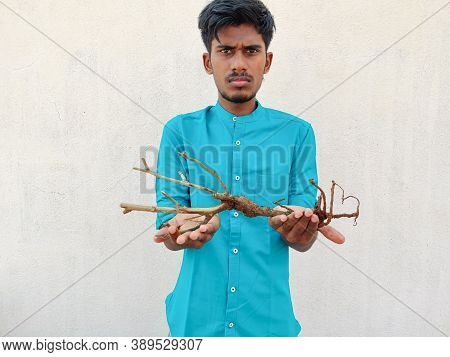 South Indian Man In Cyan Shirt Giving A Stem With Roots Of A Small Plant. Save Trees Concept, Isolat