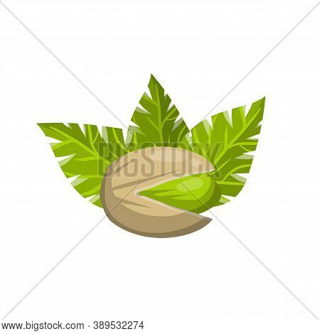 Pistachios. Green Nuts In Their Shells. Walnut With Leaves. Snack And Food. Cartoon Flat Illustratio