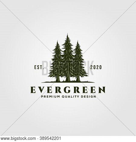 Evergreen Logo Vintage Illustration Design, Pine Trees Logo