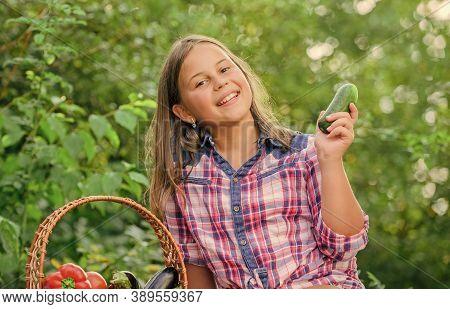 Summer Harvest Concept. Organic Harvest. Eat Healthy. Kid Gathering Vegetables Nature Background. He