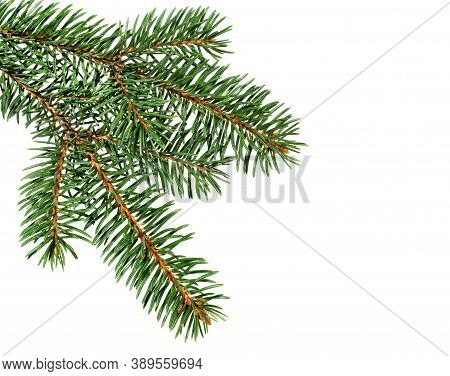 Fir Tree Branch Isolated On White Background. Pine Branch. Christmas Ornament.