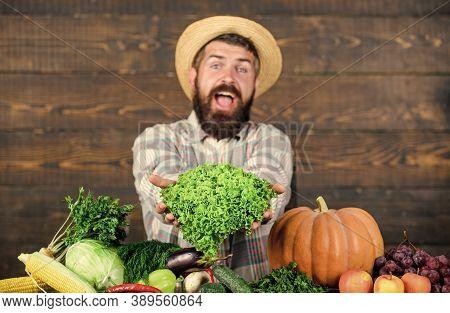 Typical Farmer Guy. Farm Market Harvest Festival. Man Mature Bearded Farmer Hold Vegetables Wooden B