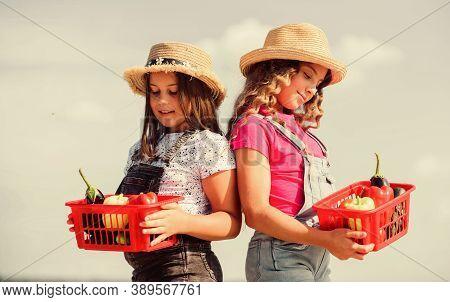 Natural Vitamin Nutrition. Organic Vegetables. Girls Cute Children In Hats Farming. Kids Gathering V