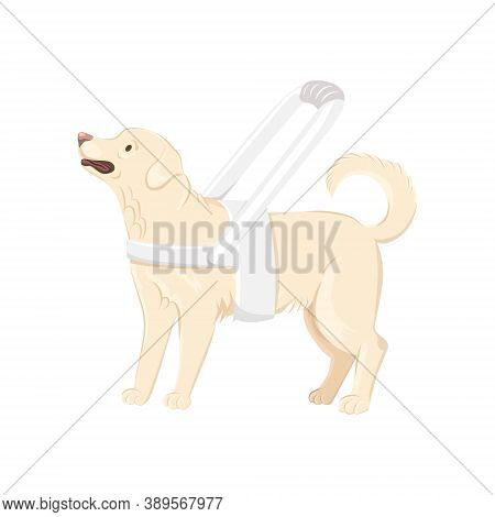 Guide Dog Wears White Harness With Long Handle Vector Illustration. Labrador Retriever With White Ha