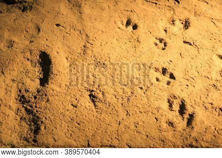 Alicante, Spain- October 8, 2020: 1st Century Human And Animal Footprints From The Lucentum Site And