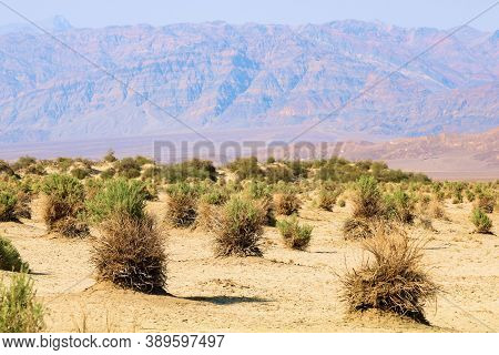Chaparral Shrubs Covered With Sand And Rocks On Sand Dunes With Barren Mountains Beyond Taken At The