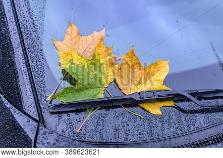Fallen Yellow, Green And Brown Leaves Lie On The Windshield Of A Car In Early Autumn.