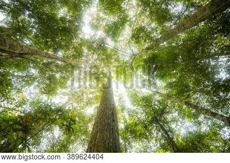 Green Jungle Tree With Green Leaves And Sun Light And Plant Detail Nature In The Forest Look Under T