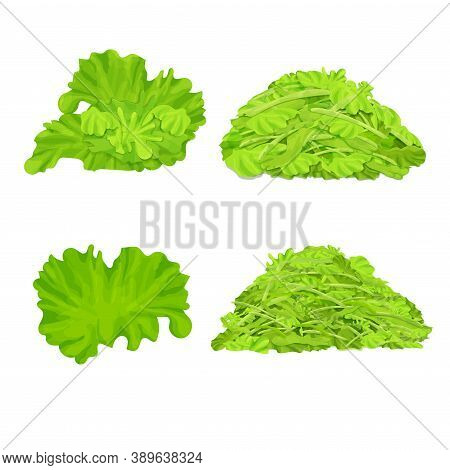 Set Of Different Lettuce Isolated On White Background. Leaves, Shredded Salad Pile, Stack. Realistic