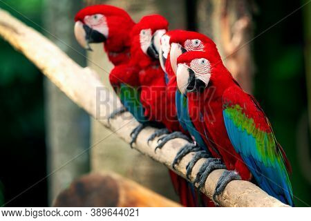 A Group Of Macaw Birds In The Deep Wild