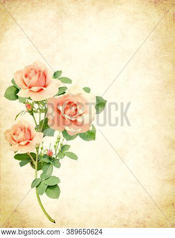 Vintage romantic card with old paper texture and rose. Retro postcard with pink roses flowers. Mock up template. Copy space for text