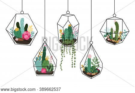 Doodle Hanging Terrarium. Succulents And Cactuses Glass Florariums, Tropical Plants Interior Geometr