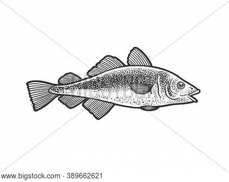 Atlantic Cod Fish Sketch Engraving Vector Illustration. T-shirt Apparel Print Design. Scratch Board