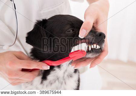 Pet Animal Dog. Dog On Street. Close Up Of Animal Dog. Dog. City Life Of Beautiful Dog