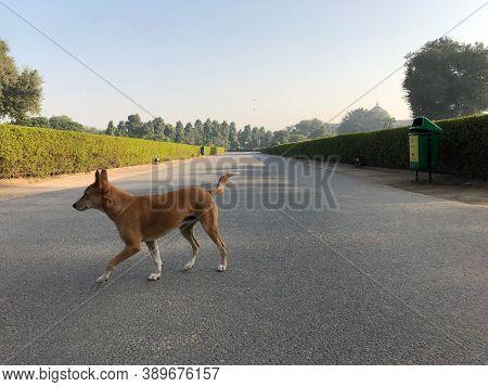 Dog Background. Old Dog On Street. Close Up Of Pet Animal Dog. Dog. City Life Of Beautiful Dog