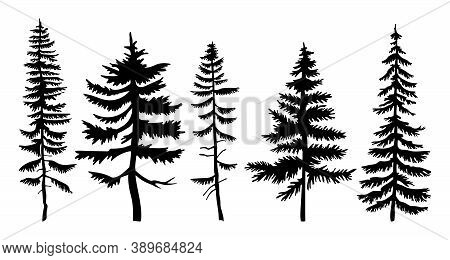 Set Of Vector Black Silhouettes Firs And Pines. Flat Illustrations Of Forest Trees. Winter Wood. Tai