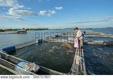 31/dec/2018/kalasin Thailand:fishermen Working In Fish Farming In Lam Pao Dam In Thailand Are Feedin