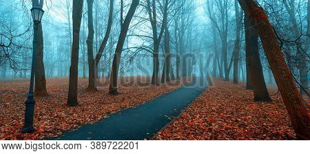Autumn landscape, panoramic autumn view. Autumnl in the city autumn November park. Foggy autumn park alley in cold tones, foggy autumn view. Autumn panorama, autumn landscape