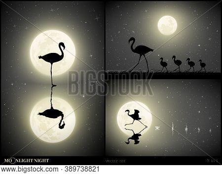 Flamingo Family Walking On Moonlight Night. Elegant Bird Silhouette And Splashes On Water. Running A