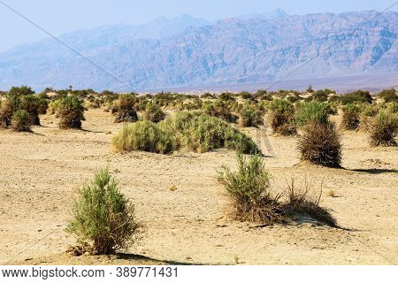 Shrubs Which Collect Debris On A Sandy Windswept Plain Taken At The Devil\'s Cornfield In Death Vall