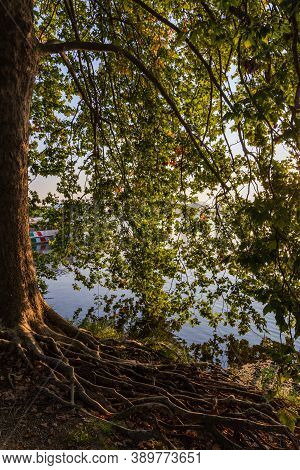 The Roots Of A Tree In The Shade Of Its Branches In An Autumn Morning By The Lake, Naturalistic Imag