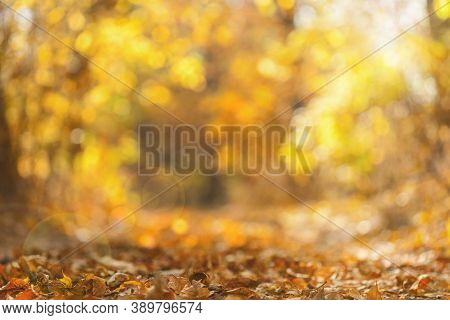Blurred Autumn Background.beautiful Warm Soft Bokeh Yellow Autumn Leaves.natural Blur Background Of