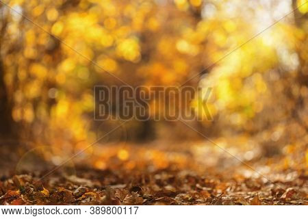 Fall Leaves In Blurred Autumnal Forest Idyll. Autumn Leaves On The Sun.blurred Natural Background. A