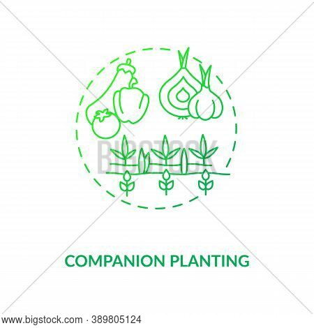 Companion Planting Concept Icon. Organic Farming Principles. Vegetables And Fruits Farmming Places.