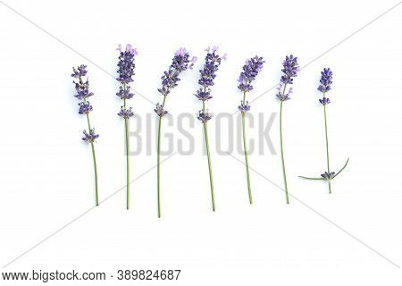 Selective Focus Freshness Bunch Of  Lavender Flower With Branch And Green Leaves, Sweet Violet Flowe