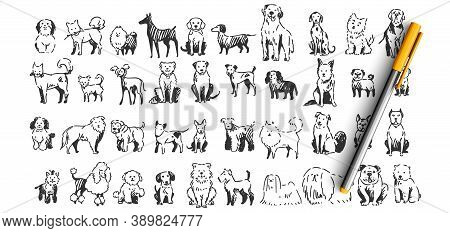 Dogs Doodle Set. Collection Of Hand Drawn Pencil Ink Drawing Sketches Templates Patterns Of Domestic