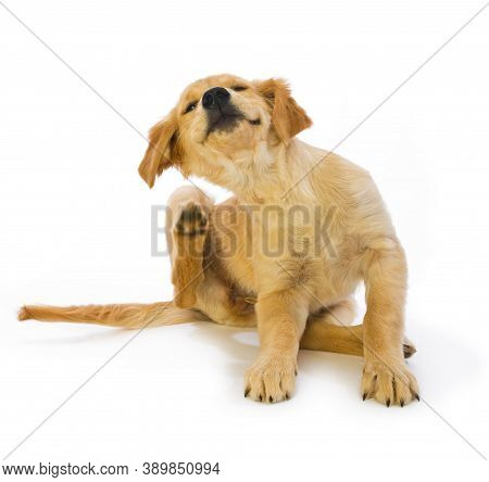 Dog On Street. Lack, White And  Brown Dog. Cute And Beautiful Dog. Dog In The Garden Or In The Park.