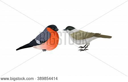 Feathered Birds Or Avian With Sparrow And Bullfinch Vector Set